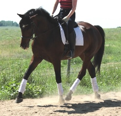 Rumba trot in clinic-th250